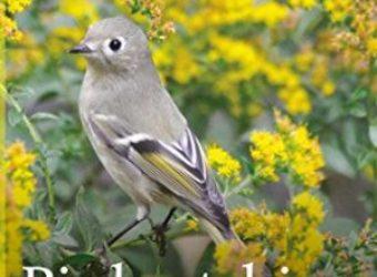 Birdwatching-Manhattan-larger