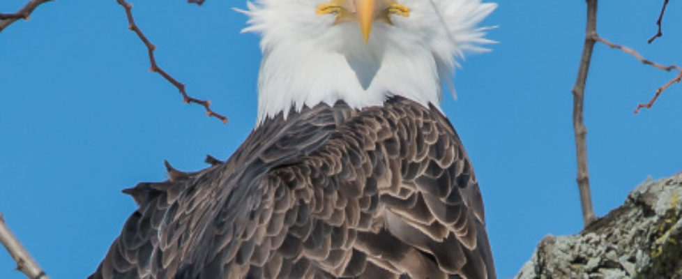 eagles-in-sun-2-10-15-4-cropped