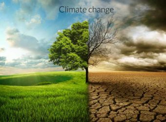 climage-change-tree