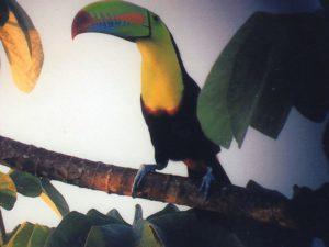 Keel-billed Toucan. Photo Joe Wallace
