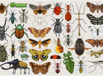 entomology_mumbo_jumbo_by_killskerry-d4cg7a2
