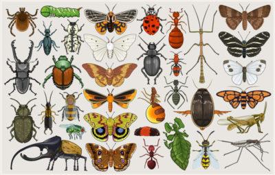 Entomology Mumbo-Jumbo by Killskerry